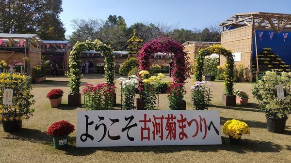 菊まつりエントランス2.jpg